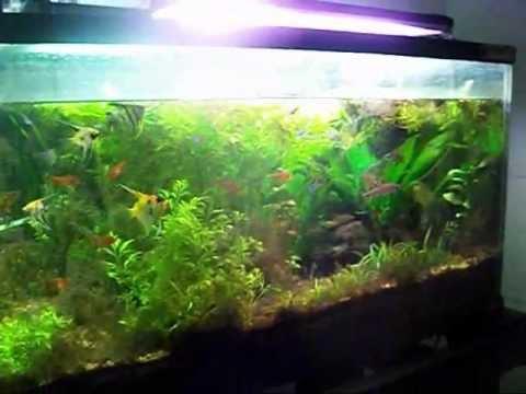 125 planted tank 55 gallon reef 1500 gallon koi pond youtube for Koi pond gallons