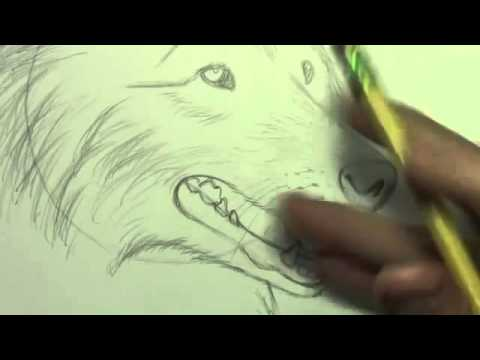 Dicas Desenhar Um Cachorro Passo A Passo Youtube