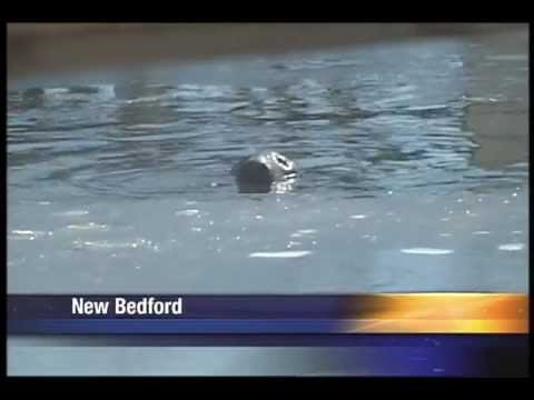 Seal Visits New Bedford MA