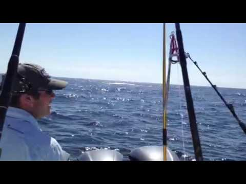 Mako shark Saltgrass lodge venice offshore charter captain