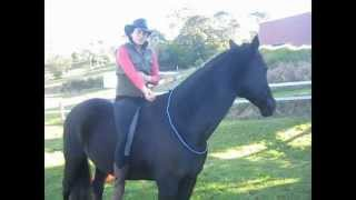 How to ride bareback, no reins, no bridle