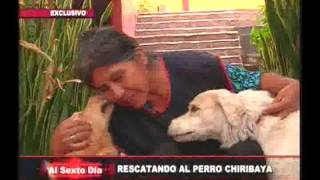 Rescatando al can chiribaya: la insólita historia detrás del