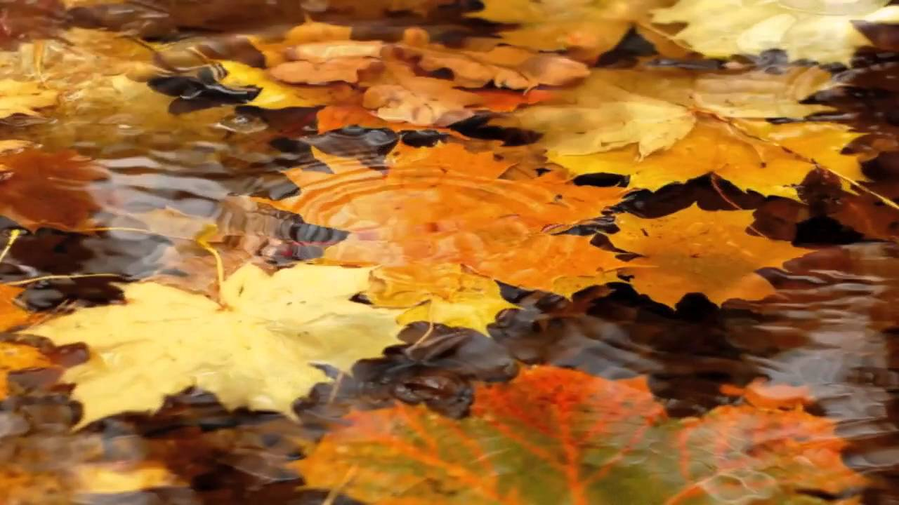 Fall Leaves Falling Wallpaper Video Background Nature Autumn Leaves Rain Youtube