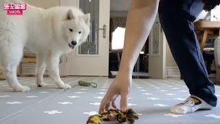 신나게 갖고 놀던 장난감을 주인이 치웠을때 강아지의 반…