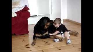 Rottweiler Vs Baby