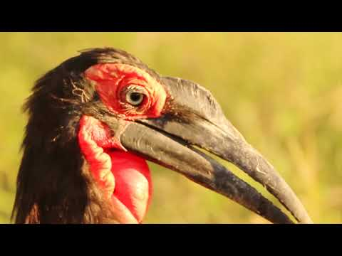 Bushveld Birds - Africa's Wild Wonders - The Secrets of Nature