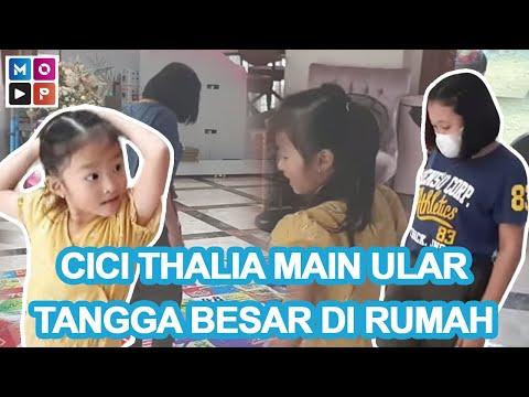 Download SERUNYA CICI THALIA MAIN ULAR TANGGA BESAR DI RUMAH - CUAP CUAP PAGI