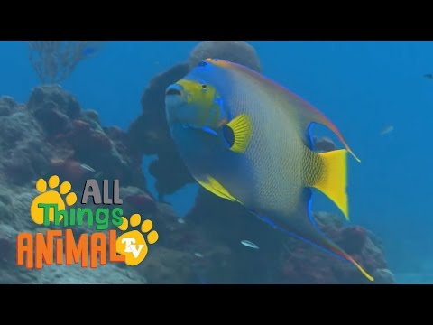 * FISH * | Animals For Kids | All Things Animal TV
