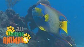 �������� ���� FISH |  Animals for children. Kids videos. Kindergarten | Preschool learning ������