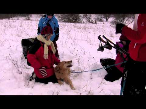 mendon-pond-dog-sled-and-skijor-fun-race-11-16-11