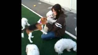 The Local Bark - Rancho Cordova Kennel Boarding Training Dogs