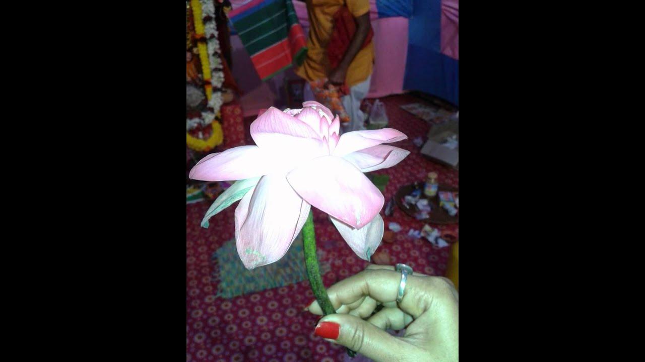 Lotus flowerazing pink colour of this flower youtube lotus flowerazing pink colour of this flower izmirmasajfo