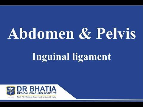 Anatomy - Abdomen & Pelvis (Inguinal ligament)