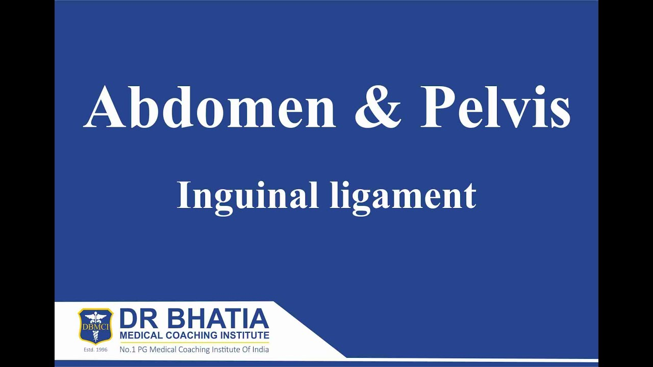 Anatomy - Abdomen & Pelvis (Inguinal ligament) - YouTube