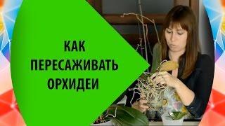 Как пересаживать орхидеи(Как пересадить орхидею, посадить детку и разделить куст на две части. Пересаживаем орхидею фаленопсис...., 2014-11-27T19:59:57.000Z)
