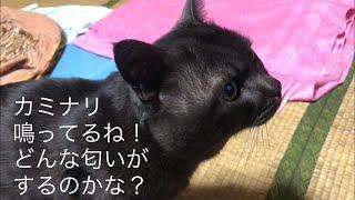 カミナリ #雷 #黒猫.