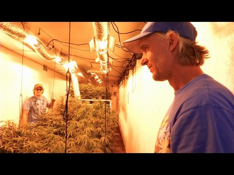 Starting a Recreational Marijuana Business: CannaMan Farms