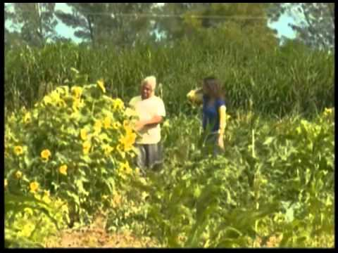 Noticiero Telemundo: Gran Ayuda (Verde Gardens / Juan Lopez)