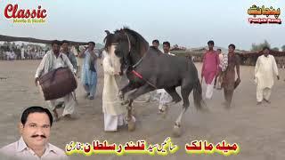 86/Best Horse Dance Punjab Meerik Sial Jhang 2018/ Bani Syed Qalandar Sultan