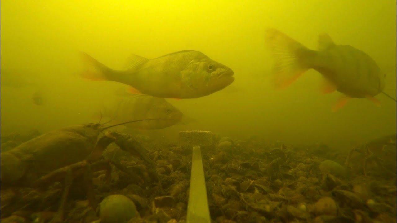 Эксперимент   реакция рыбы на жмых   сколько здесь рыбы: окунь, щука, карась, плотва   рыбалка 2020