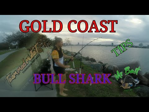 BULL SHARK TIPS. Gold Coast