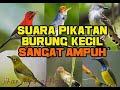 Suara Pikat Pikatan Semua Jenis Burung Kecil  Mp3 - Mp4 Download