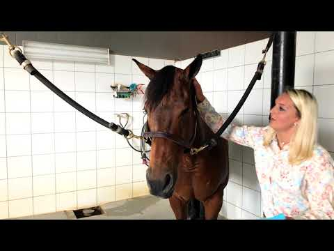 How To Apply Fly Spray To A Horse