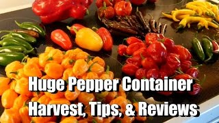 AUGUST: Huge Chile Pepper Container Harvest, 5 Tips for Growing, and Pepper Reviews