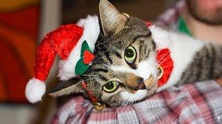 Tchaikovsky: Nutcracker Suite w/ Christmas Cats (James Dale, organ)