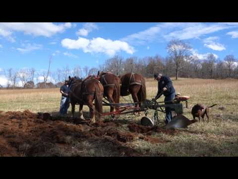 Horse Plowing at the new Floyd County High School Farm