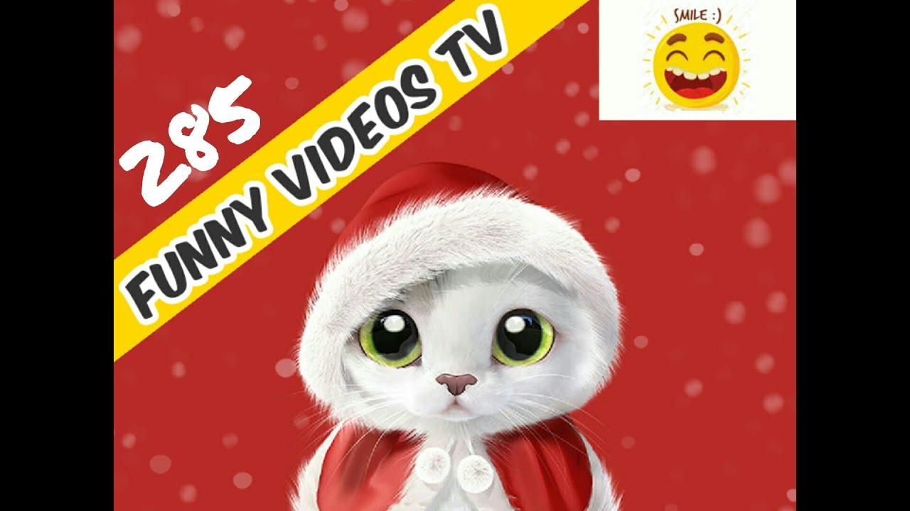 Funny Videos 285