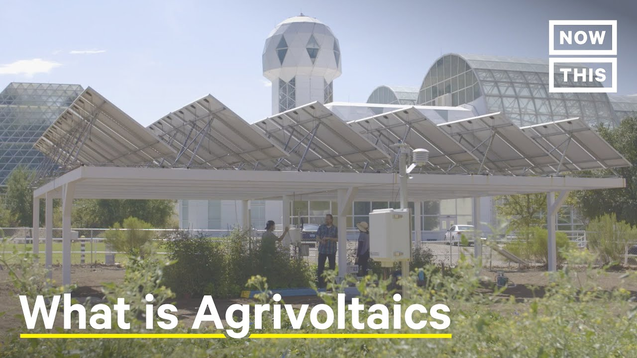 Agrivoltaics: Solar Panels Bring Life to Struggling Farms