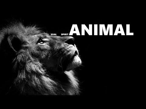 SOAL - SPIRIT ANIMAL [LYRIC VIDEO]