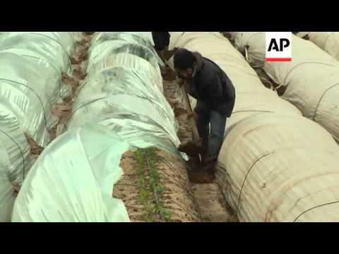 Snow in Ramallah and Zaatari refugee camp; rainstorms damage crops in Gaza