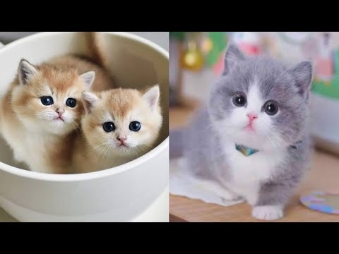 Baby Cats - Cute and Funny Cat Videos Compilation #13 | Aww Animals