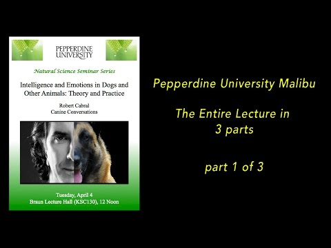 Robert Cabral Lecture -Pepperdine University Malibu - Intelligence and Emotions in Dogs #1