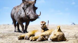 The Lion King 'Timon & Pumbaa' Movie Clip (2019) Disney HD