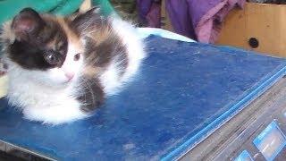 Сколько весит котёнок? How heavy cat.