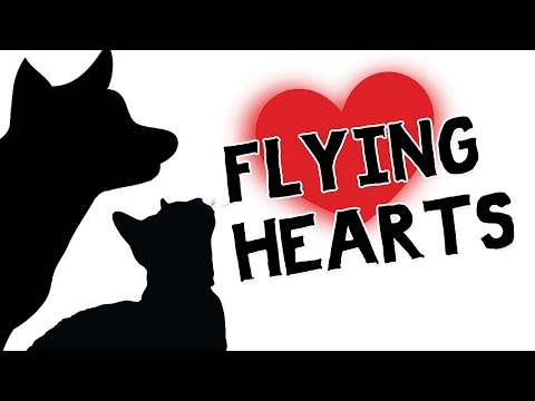 CAT GAMES - FLYING HEARTS (FOR CATS ONLY)