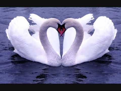 The Swan (Carnival of the Animals)