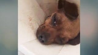 El cachorro lloró y se preguntó por qué le pasaban estas cosas.