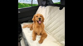 Top 5 Best Car Seat Covers for Dogs