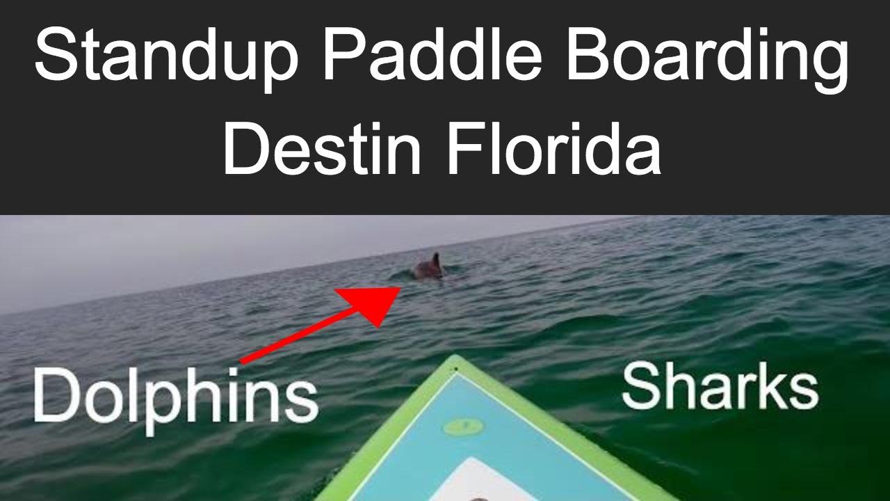 Standup Paddle Boarding - Ocean Wildlife Things Needed to Get