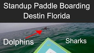 Standup Paddle Boarding (SUP) with Dolphins and Sharks // Destin Florida