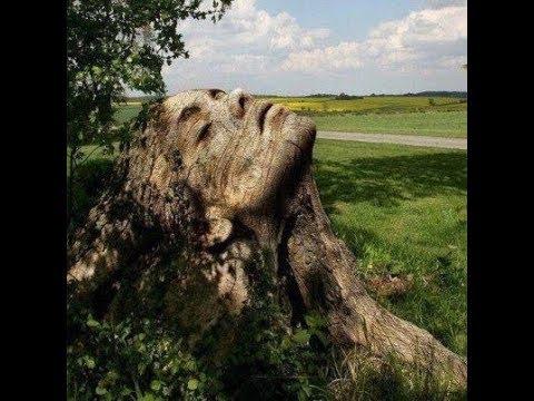 Árboles-con-formas-exÓticas