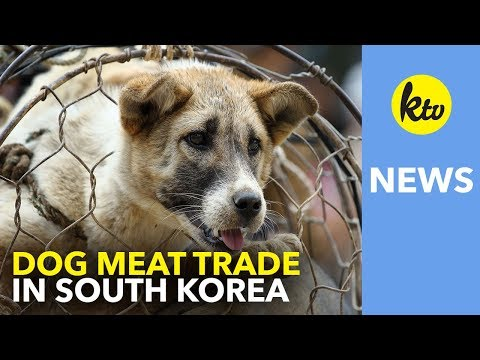 Dog Meat Trade in South Korea