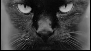 Hypnocat the hypnotising cat