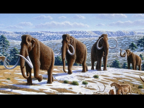 Island mammoths experienced genetic 'meltdown'