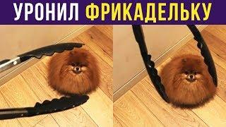 Приколы. УРОНИЛ ФРИКАДЕЛЬКУ   Мемозг #118