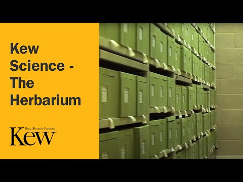 Kew Science - The Herbarium
